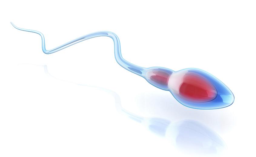 Espermatozoide en pruebas de fertilidad